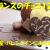 フランスのチョコレート12選☆お土産・バレンタインにも!